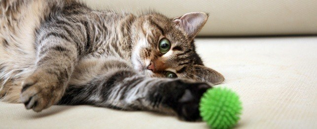 Premeňte sa na mačku